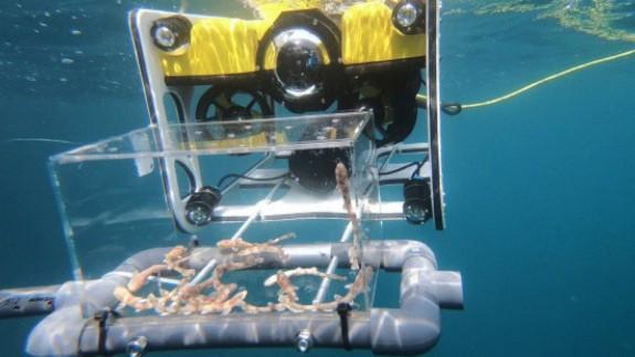MURyCÍA. Un dron submarino de la empresa Nido Robótic suelta una cría de Tiburón en nuestra costa