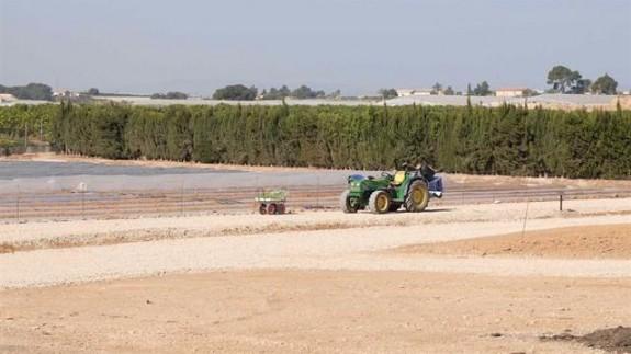 Plantación en el campo de Cartagena