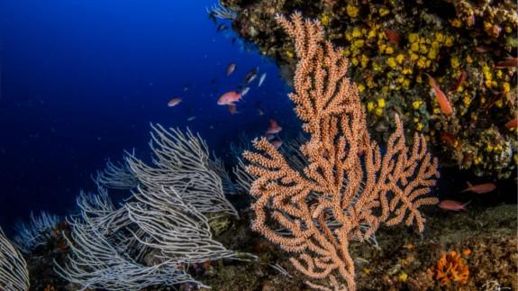 Fondo marino en la Reserva de Cabo de Palos-Islas Hormigas