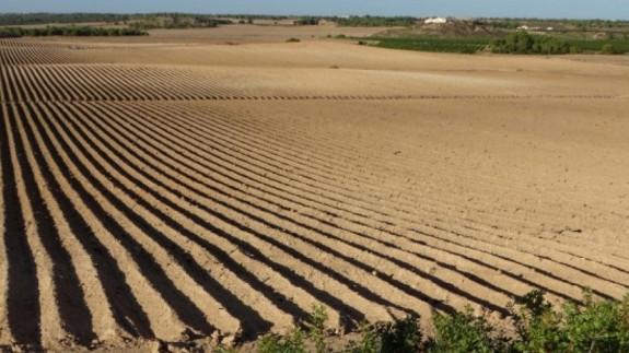 Parcela de agricultura intensiva