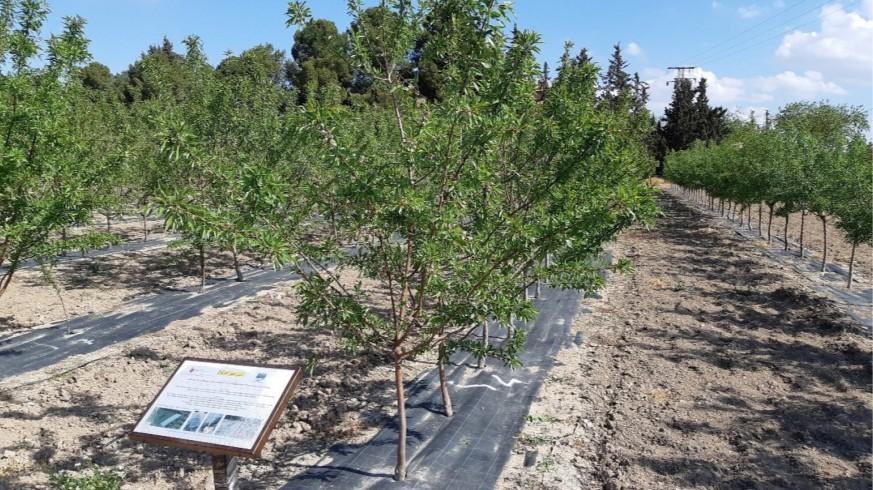 Cultivos en Torre Pacheco