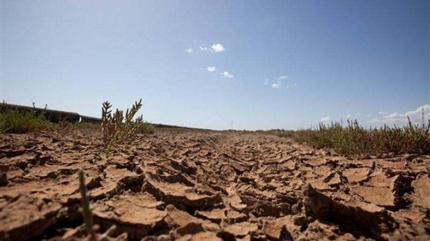 Un campo de cultivo seco. GREENPEACE