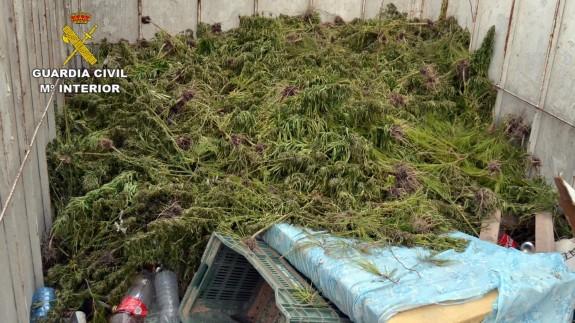 La Guardia Civil de Murcia intercepta un camión con 1.150 plantas de marihuana
