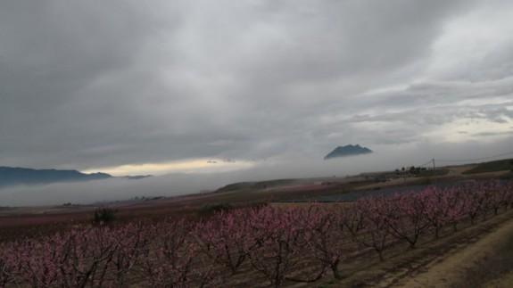 Los campos murcianos bajo la niebla. ORM