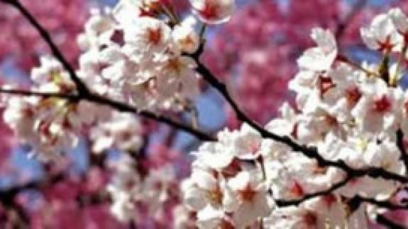 VIVA LA RADIO. Martes verde ¿Cómo afecta este aperitivo de primavera a la floración?