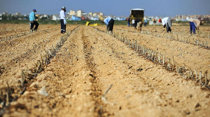 Trabajadores en el Campo de Cartagena