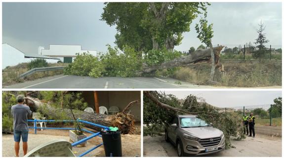 Las tormentas derribaron árboles en la RM-730 (arriba), piscina de Abarán (izda.) y en Cieza (dcha.). Fotos: ES y CC