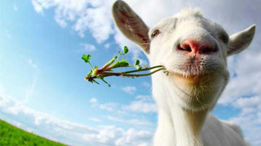 VIVA LA RADIO. Cambiemos el mundo. Vegetarianos al poder. Cada vez son más y empiezan a ser tenidos en cuenta