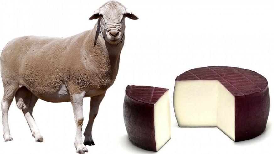 Cordero segureño y queso de cabra al vino