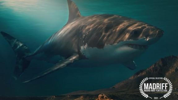 EL ROMPEOLAS. El tiburón blanco, protagonista de un documental aguileño