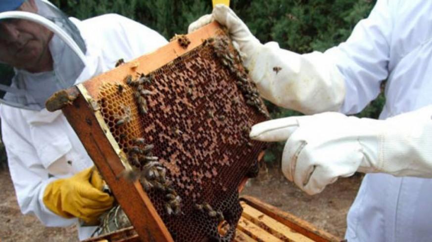 Dos apicultores con una colmena