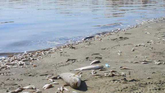 Foto: Ecologistas en Acción.