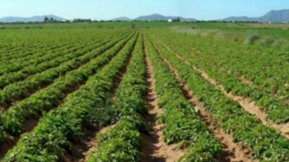 Cultivos en el Campo de Cartagena. ORM