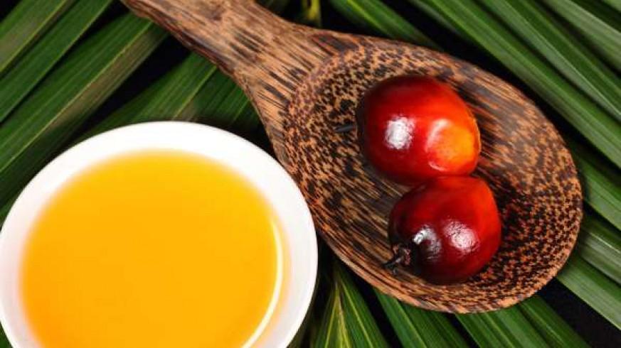 Imagen del aceite de palma