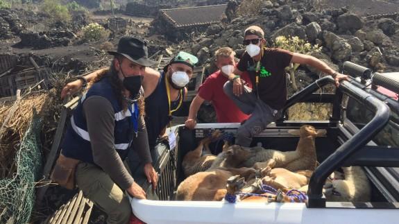 Veterinarios de Canarias rescatando animales afectados por el volcán.