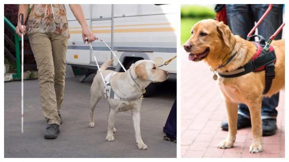 PLAZA PÚBLICA. Día Internacional del Perro Guía, apoyo a personas con discapacidad visual