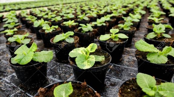 VIVA LA RADIO. Martes Verde. El confinamiento de las plantas: El invernadero