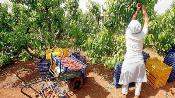 El Ministerio de Sanidad propone un nuevo protocolo para evitar brotes de covid en el campo
