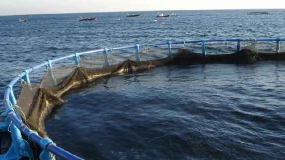 VIVA LA RADIO. El factor humano. La acuicultura ya supera las capturas de la pesca extractiva