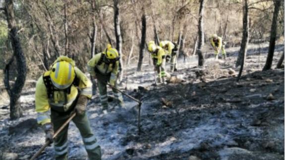 Brigadas forestales siguen trabajando en la zona