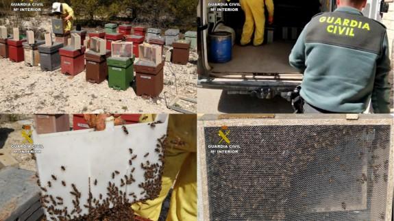 Los agentes localizan las abejas robadas. GUARDIA CIVIL