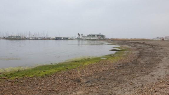 Imagen de archivo del mar Menor con algas a las orillas