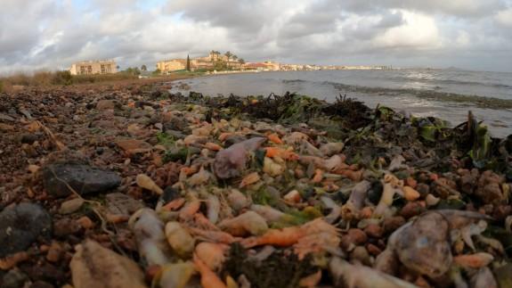 """El Gobierno regional denuncia por """"inacción"""" al Ministerio ante los vertidos al Mar Menor"""