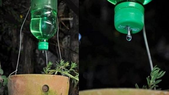 VIVA LA RADIO. Martes verde. ¿Cómo cuidamos nuestras plantas cuando salimos de viaje?