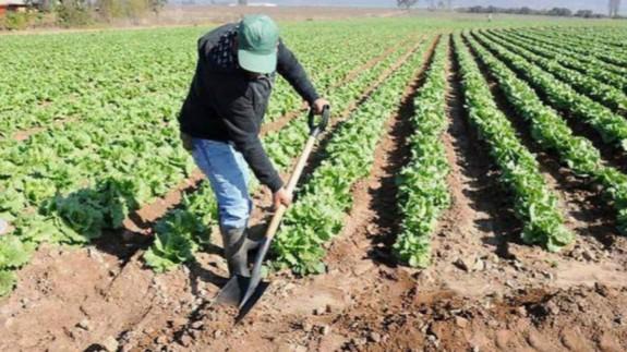 Un trabajador agrícola