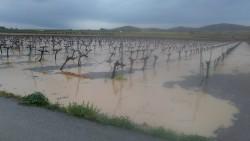Las intensas lluvias en el Altiplano salvan la próxima cosecha de vid, olivo y almendro
