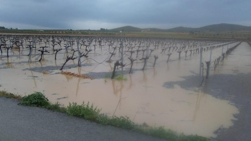 Viñedos anegados por el agua en Yecla