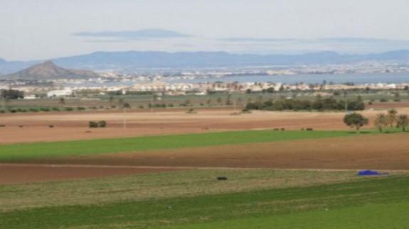 Cultivos de regadío cerca del Mar Menor.